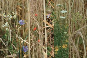--PapR biodiv fiori 2Mb